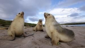 The Auckland Islands photo