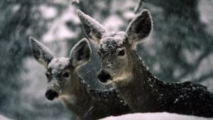 Earth's Wildlife 照片
