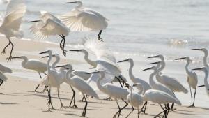 Wild Srilanka photo