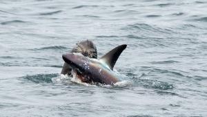 Shark Eater photo