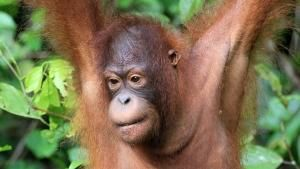 Heart of Borneo photo