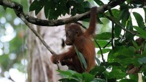 Heart of Borneo photo