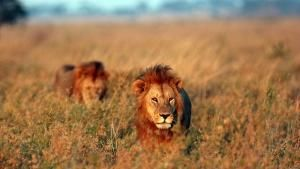 The Serengeti photo