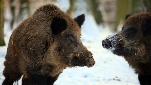 باشگاه نبرد حیوانات عکس