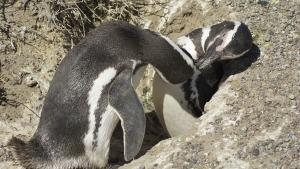 کانگوروها، ببرها، هشت پاها عکس