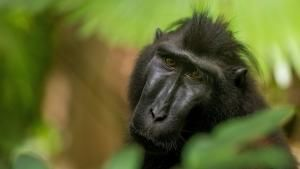 حیات وحش اندونزی عکس