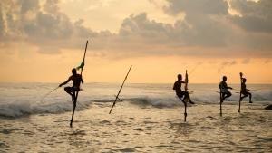 حیات وحش سریلانکا عکس