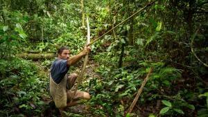 جنگل وحشی عکس