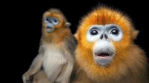 Photo Ark: Rarest Creatures photo