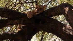 Secret Life of Predators photo
