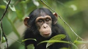 Kingdom of The Apes photo