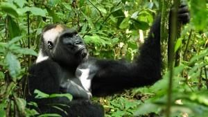 مملكة القرود صورة