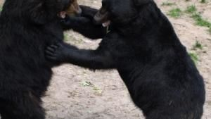 Animal Fight Club photo