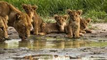 Botswana Wildlife show