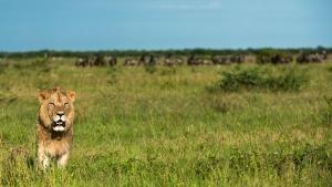 Botswana Wildlife photo