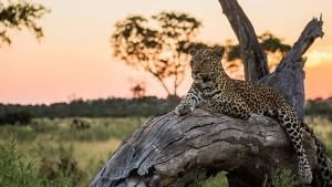 Botswana Wildlife photo