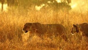 Africa's Wild Kingdom Reborn photo