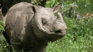 Operation Sumatran Rhino photo