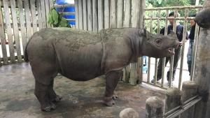 Operation Sumatran Rhino photo
