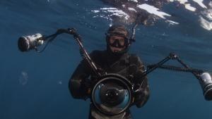 Sharks Under Attack photo