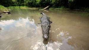 Australian Crocodiles photo