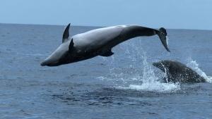 Great Marine Mammals photo