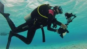 حماة البيئة البحرية صورة