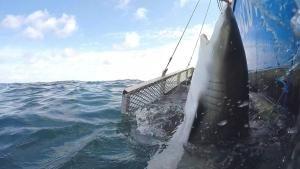 هجوم أسماك القرش صورة