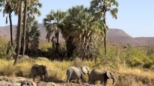 Namibia (Namibia, Sancutary Of Giants) photo