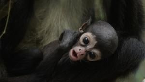 Return of The Spider Monkeys photo