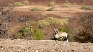 نامبيا ملاذ العمالقة صورة