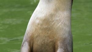 قلمرو مخفیانه بورنئو:جنگل مارهای پرنده عکس