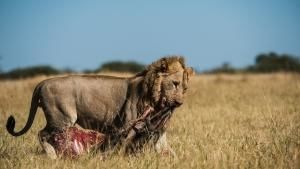 Savage Kingdom: Uprising photo