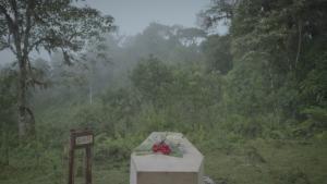 خفايا مقتل دايان فوسي صورة