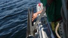 خبرچین ها ماهی می گیرند برنامه