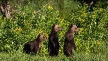 رودخانه آمور: آمازون آسیا: به سوی سرزمین سایه ها برنامه