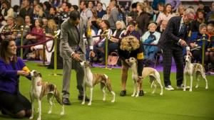 Hounds photo