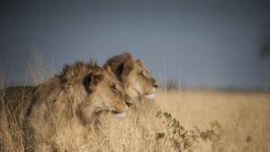بوتسوانا: صراع من أجل الكبرياء صورة