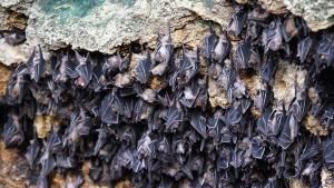 Philippine Biodiversity photo