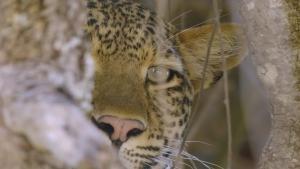 حيوانات أفريقيا المفترسة صورة