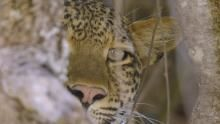حيوانات أفريقيا المفترسة برنامج