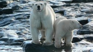 قطب شمال عکس