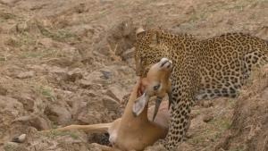 Africa's Hunters photo