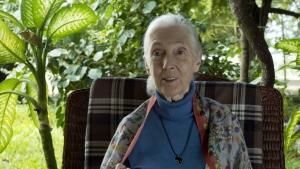 Jane GoodAll: Saving Paradise photo