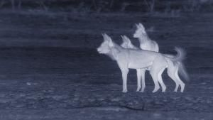The Hot Springs Pack photo