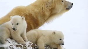 Alaska: Grizzly Paradise photo