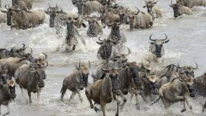 Nile Untamed photo