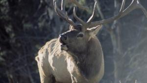 Rocky Mountain Battleground photo