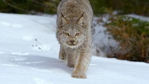 North American Wildlife photo
