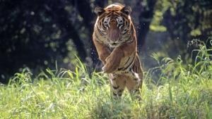Wild 24 photo